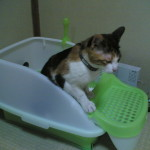 猫のトイレ砂のタイプを固めない方にしてみる