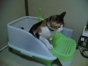 猫のトイレ砂のタイプを固めない方にしてみる_1