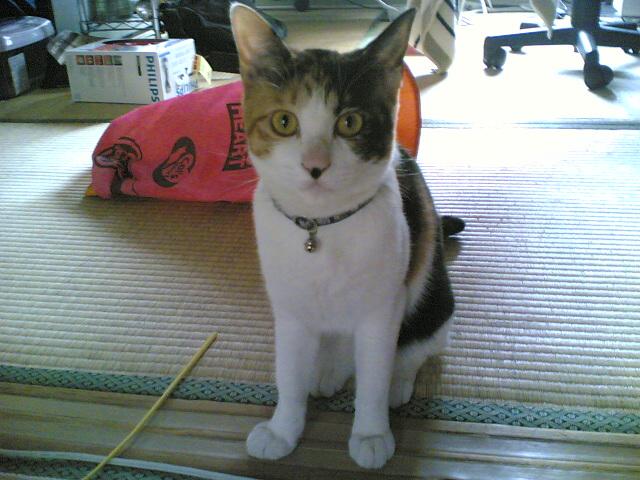猫のハナクソ