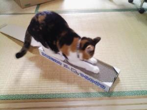 インターネットで猫グッズを買う_2