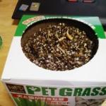 ガーデニングはじめました(猫草) – 芽が生えた!