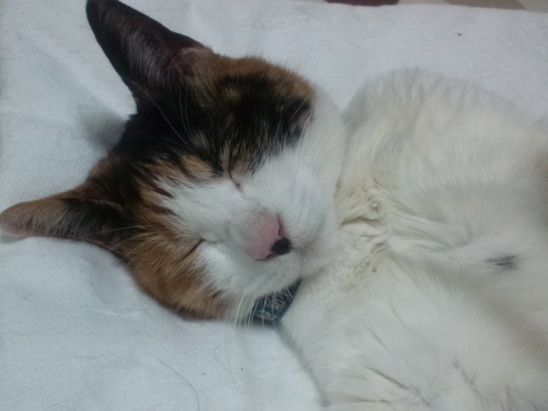 インテリア性の高い猫爪とぎ猫「リーフキャット」が今年のクリスマスプレゼントです。
