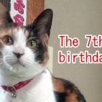 代表取締役メイ、7歳の誕生日です。