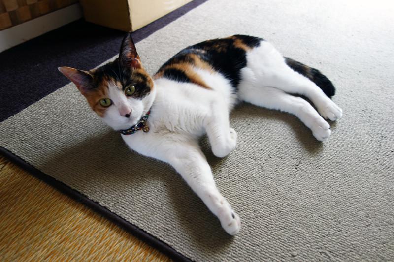 NHKおはよう日本 「なぜ?捨て猫逃がして書類送検」を見て、猫ITソリューションズが思うこと