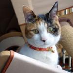 「猫の首輪工房」で9歳の誕生日プレゼントを買ってもらいました。