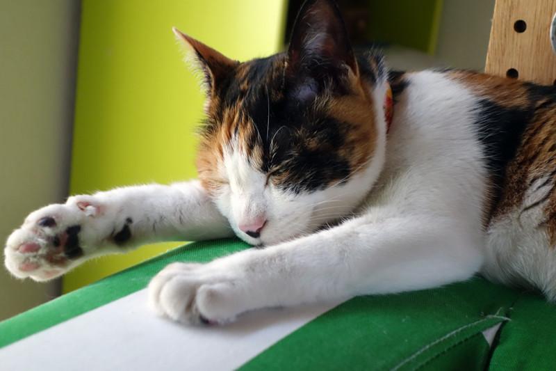 「らごるー!」「I know~」猫のローラさんから動画で学ぶ、猫の洗い方