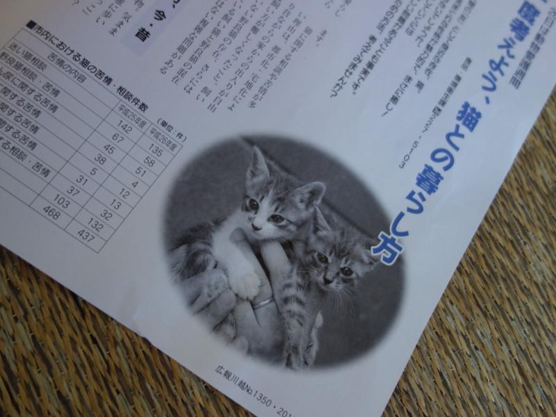 広報川越で「もう一度考えよう、猫との暮らし方」という記事が掲載されていました。