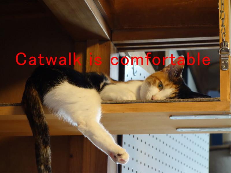猫階段とキャットウォークのアイデア7選