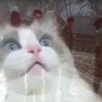 猫もフラッシュバックしうわああああああ!!!!な動画