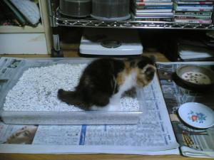 猫のトイレ砂のタイプは?_1