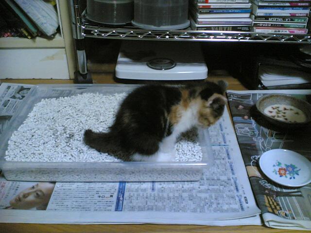 猫のトイレ砂のタイプは?