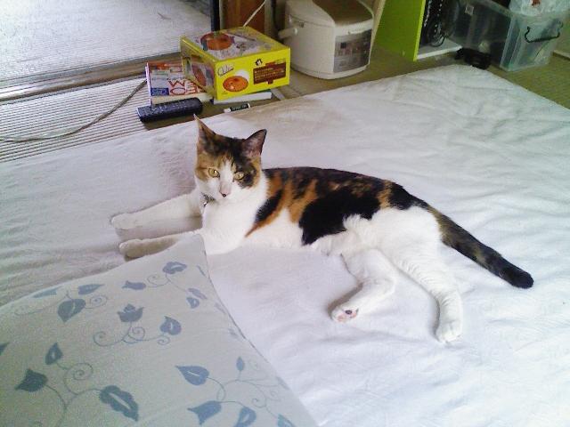 三毛猫メイの誕生日プレゼント「チューゲット」