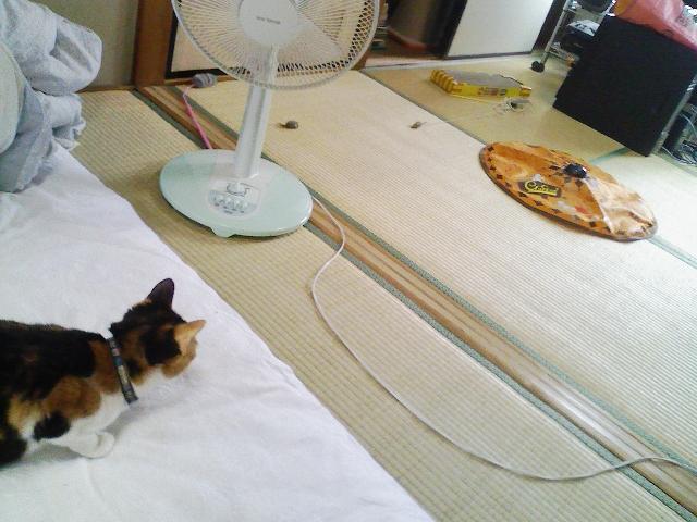 ガーデニングはじめました(猫草) – 刈り入れ