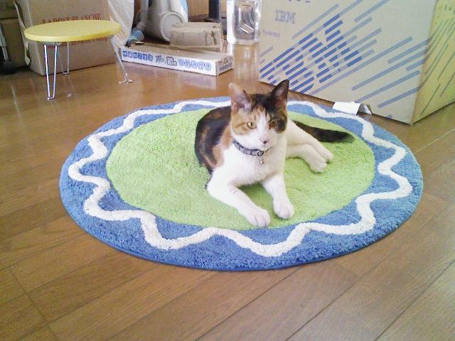 猫の暑さ対策涼しさはお腹から