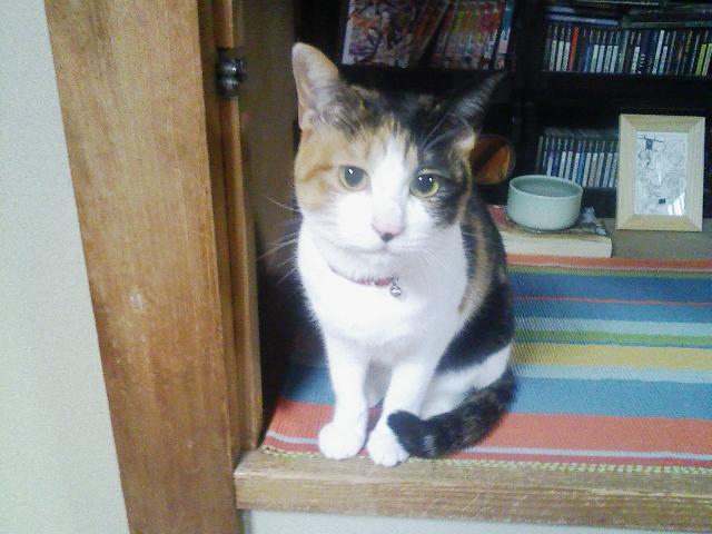 F.L.U.T.D(猫下部尿路疾患)に注意しよう