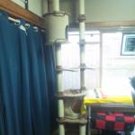 代表取締役メイの誕生日&社屋増築(猫タワー)
