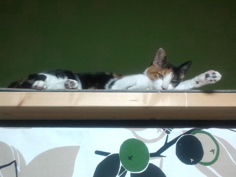 猫の年末大そうじ提案 – ついでに猫ブリッジを設置してみませんか?