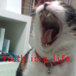 猫の5つの歯磨き方法