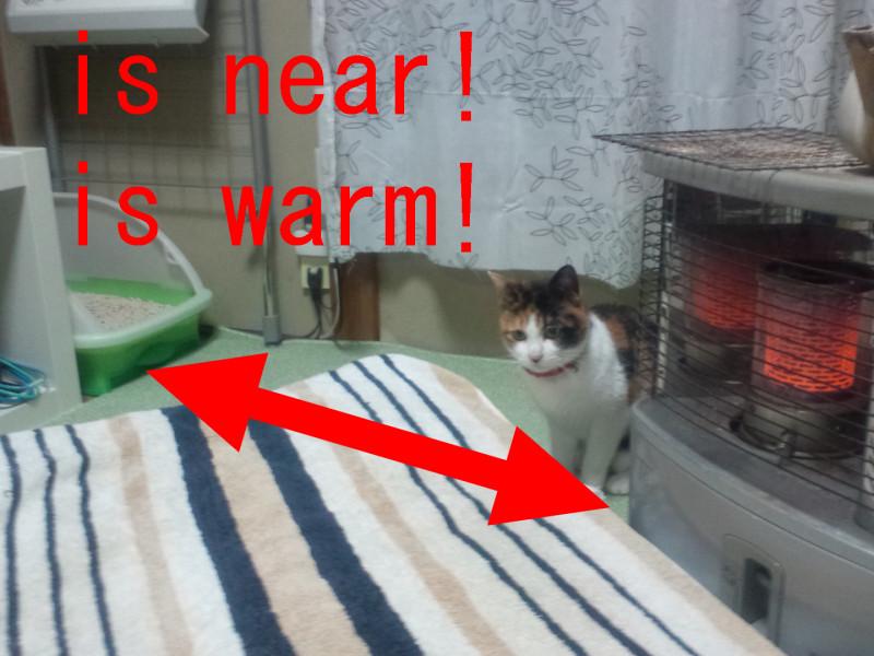 寒いとトイレが「遠くなる」?猫トイレは暖かい所に置こう!
