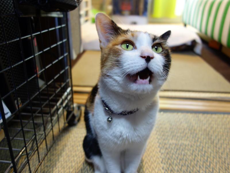 DSC-RX100による猫写真