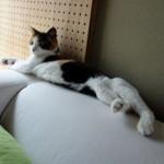 猫がハァハァ言い出す2つの理由(熱中症/緊張)