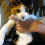 猫のぽっちゃり肥満による病気は、予想以上に怖い