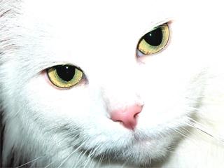 猫は1匹でも寂しくないのか?