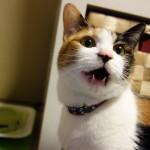 埼玉在住の三毛猫です。趣味は日向ぼっこ、好きな猫缶はカツオ系です。仲良くしてくださいね!